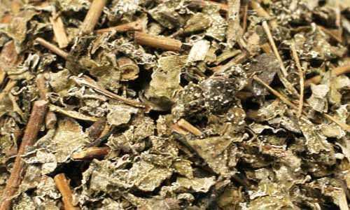 Tác dụng của chè dây rừng thiên nhiên chữa đau dạ dày chất lượng
