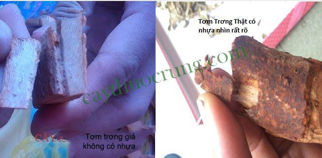 địa điểm bán thang thuốc thuốc amakong tây nguyên tại Thanh Hóa chữa yếu sinh lý