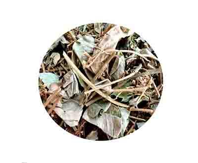 Kim tiền thảo khô