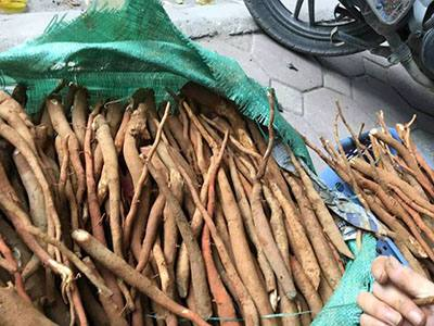 Địa chỉ bán sâm cau đỏ tại Quảng Ninh